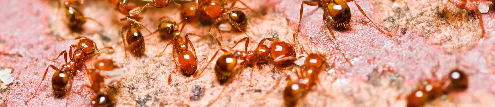 Ant Control Header