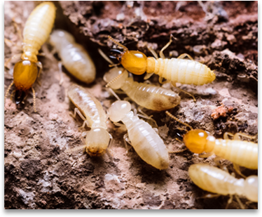 Signs of Termites1